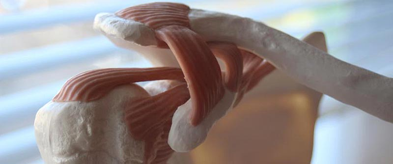 Schulter-Knochen